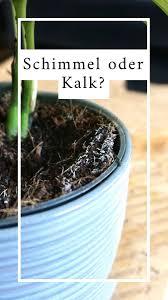 schimmel oder kalk bei zimmerpflanzen pflanzen pflanzen