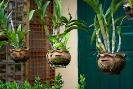 pflegetipps für hängende zimmerpflanzen räume selbst begrünen