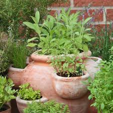 Gardening Ideas Border With Catmint Home Nwitimescom