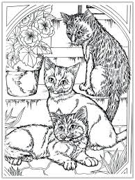 Cat Coloring Pages Realistic Adult Colouring For Adults Hello Kitty Online Free