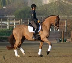Best Horse Shedding Blade by Easycare Easycare