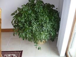 plantes vertes d interieur ombre peu d entretien plantes d intérieur increvables