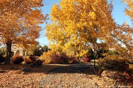 Pumpkin Patch Reno by 17 Activities To Do In Reno During The Fall Season