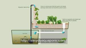Aquaponics In Hawaii Economical Cinder Bed System YouTube