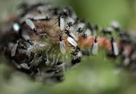 fliegende ameisen im haus was tun rüben