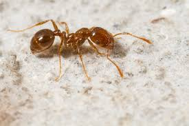 tiere im badezimmer woher kommen motten ameisen co
