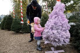 Mountain King Christmas Trees Color Order by Shuttered Santa Cruz Ghost Of Christmas Past Draws Faithful Flock