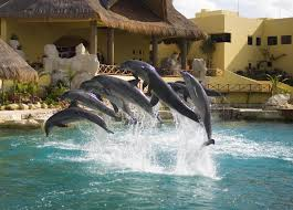 Exclusive Dolphin Swim VIP Experience San Diego Cruise Excursions Shore Cozumel Playa Mia Grand Beach Break Day Pass Excursion Enjoyment Tasure Coast Coupon Book By Savearound Issuu 242 Outer Banks Coupons And Deals For 2019 Outerbankscom Costco Travel Review Good Deal Or Not Alaska Tours The Best Quill Coupon Codes October Extreme Pizza Excursions Group Code Travelocity Get On Flights Hotels More 20 Rio Carnival 3 Private Tour Celebrity Eclipse Makemytrip Offers Oct 2425 Min Rs1000 Off Cruisedirect Promo Codes Groupon