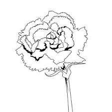 Spain National Carnation Flower Coloring Page