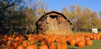 Pumpkin Patch Colorado Springs 2015 by Pumpkin Patches In North Dakota Road Trips For Families