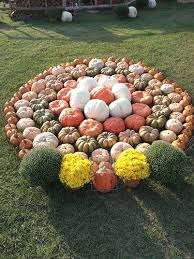 Celina Pumpkin Patch Directions by 20 Best Halloween Images On Pinterest Halloween