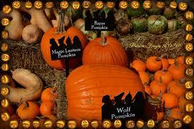 Best Pumpkin Patch Fort Worth Tx by The Flower Mound Pumpkin Patch