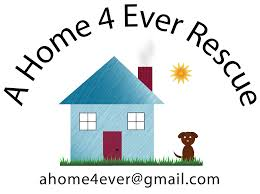 Non Shedding Small Dogs For Adoption by Hypoallergenic Dog Breeds A Home 4 Ever Rescue