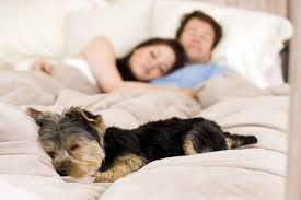 Dogs in the Bed Health Risks or Must Haves