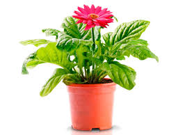 Best Pot Plant For Bathroom by Cleaning Indoor Air With Plants Hgtv