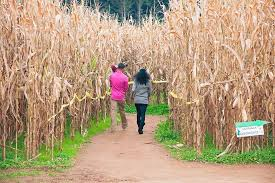 Atlanta Pumpkin Patch Corn Maze by Family Fun Northeast Georgia Mountains Travel Association