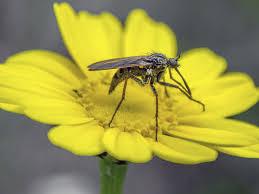 mücken bekämpfen blutsauger aus haus und garten