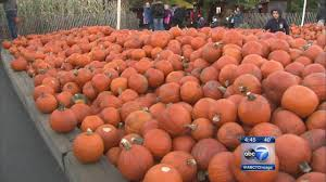Pumpkin Patch Illinois Chicago by Pumpkin Patch U0027s Fate At Center Of Homer Glen Mayoral Race