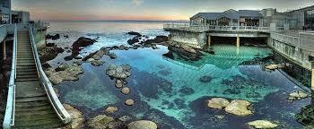 monterey sea aquarium california trip sea aquarium