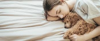 darum schlafen frauen besser mit hunden im bett radio