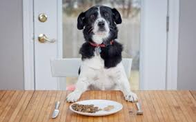 The Best Dog Food: How To Choose The Right Food For Your Pet 58 Off Valley Vet Coupon Promo Codes Retailmenotcom Oukasinfo Pet Supply Store Sckton Manteca Ca Carters Mart Welcome To Benjipet Sugar House Veterinary Hospital Vetenarian In Salt Lake City Ut Animal Medical Center Of Corona Your Friendly Vet For Your Coupon September 2018 Deals Northstar Vets Home 40 Military Discounts 2019 On Retail Food Travel More Promo Code Free Shipping Edreams Multi City Memorial Day Where Vets And Military Eat Get Discounts Flea Tick Coupons Offers Bayer Petbasics