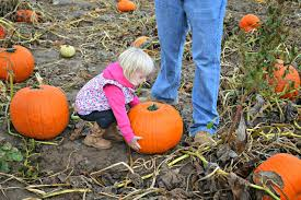 Colorado Pumpkin Patch Farm Camp by Anderson Farms Review Visiting Anderson Farms Fall Festival In
