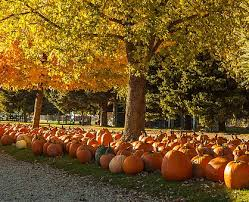 Best Pumpkin Patch Madison Wi by Eugsters Farm Market Corporate Events U0026 Picnics Petting Farm Orchar