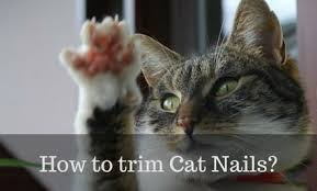 how to cut a cats nails how to trim cat nails in 7 simple steps cattention