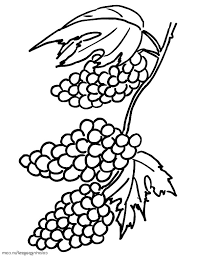 Grapes Clusters Coloring Pages