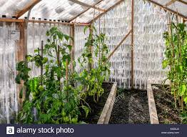 Plants Growing In A Greenhouse Made Entirely Of Recycled Drinks ... 281 Barnes Brook Rd Kirby Vermont United States Luxury Home Plants Growing In A Greenhouse Made Entirely Of Recycled Drinks Traditional Landscapeyard With Picture Window Chalet 103 Best Sheds Images On Pinterest Horticulture Byuidaho Brigham Young University 1607 Greenhouses Greenhouse Ideas How Tropical Banas Are Grown Santa Bbaras Mesa For The Nursery Facebook Agra Tech Inc Foundation Partnership Hawk Newspaper 319 Gardening 548 Coldframes
