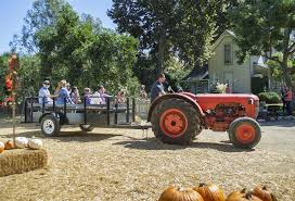 Pumpkin Picking In Ct by Community News Pumpkin Patch Pulls In New Pets Campus Times
