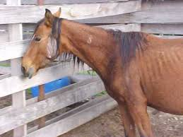 Horse Coat Shedding Tool by Does Worming Your Horse Help Shedding The Horse Forum