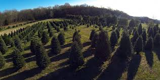 Types Of Christmas Trees Canada by Real Tree Facts U2013 Tennessee Christmas Tree Growers