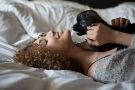 Stop Rat Terrier Shedding by Pomsky Dog Breed Information U0026 Pictures U2013 Dogtime