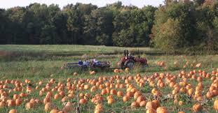Lodi Pumpkin Patch by Home Stoney Creek Farm Stoney Creek Farm