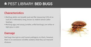 Bed Bug Prevention & Indentification