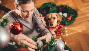 Christmas Tree Preservative Recipe by Are Christmas Trees Poisonous To Dogs And Other Christmas Dangers