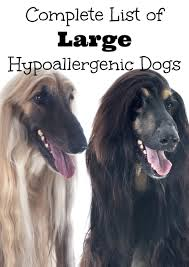 Dogs That Dont Shed Large by Complete List Of Large Hypoallergenic Dogs Dogvills