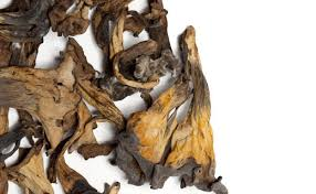 cuisiner des trompettes de la mort trompettes de la mort séchées edélices