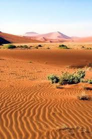 Earth Floor Biomes Desert by 13 Best Succulent Karoo Biome Images On Pinterest Biomes Flora