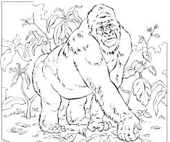 Coloring Books Mountain Gorilla Pages