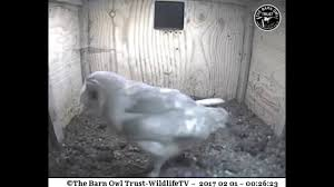MrsCBO Gets Aggressive With Cam - Barn Owl Trust-WildlifeTV - YouTube Heligan Celebrates Three Wins At 2014 Visit Cornwall Awards Leucistic Crows Wwildlifekatecouk Looduskalender View Topic Owls Around The World Tawny Owl On Nest Box Camera Youtube My Inspiration I Begin A Journey Into Dslr Trapping Www Stow Maries Heaven Mrscbo Gets Aggressive With Cam Barn Trustwildlifetv Chicks Farm Uk Stock Photos Images Alamy Blackbird Nest Drama Kestrels Little And Red Squirrels Uglybug Jackdaw