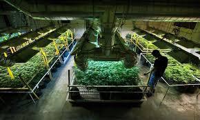 kit chambre de culture cannabis chambre de culture cannabis complete 1 extracteur d air