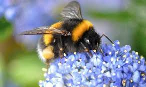 Attracting Insects To Your Garden by How To Attract Bees To Your Garden With Flowering Bulbs Garden