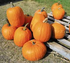 Pumpkin Picking Richmond by Best Places In Hampton Roads To Pick Your Own Pumpkin Daily Press
