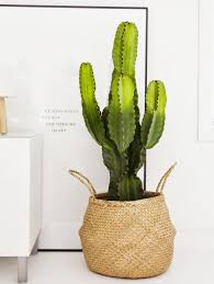 plantes vertes d interieur jungle plante verte d intérieur et cache pot déco