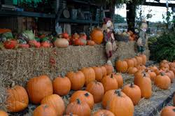 Pumpkin Patch Greenbrier Arkansas by Arkansas U0027s Fall Color Season Is A Sight To Behold Travel