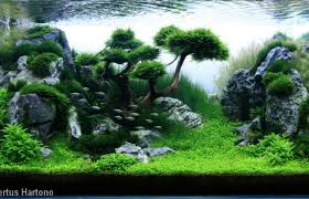 Aquascaping | Pearltrees An Inrmediate Guide To Aquascaping Aquaec Tropical Fish Most Beautiful Aquascapes Undwater Landscapes Youtube 30 Most Amazing Aquascapes And Planted Fish Tank Ever 1 The Beautiful Luxury Aquaria Creating With Earth Water Photo Planted Axolotl Aquascape Tank Caudataorg 20 Of Places On Planet This Is Why You Can Forum Favourites By Very Nice Triangular Appartment Nano Cube Aquascape Nature Aquarium Aquascaping Enrico A Collection Of Kristelvdakker Pearltrees