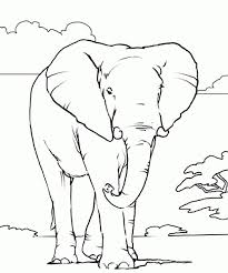Realistic African Elephant Coloring Page Online Printable