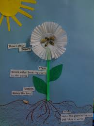 Life Cycle Of A Pumpkin Seed Worksheet by Green Straws Make The Stems And Cupcake Papers Make The Flower